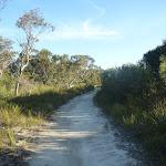 Wilkins Track near Terrey Hills (307496)