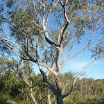 Trees on Wilkin's Track