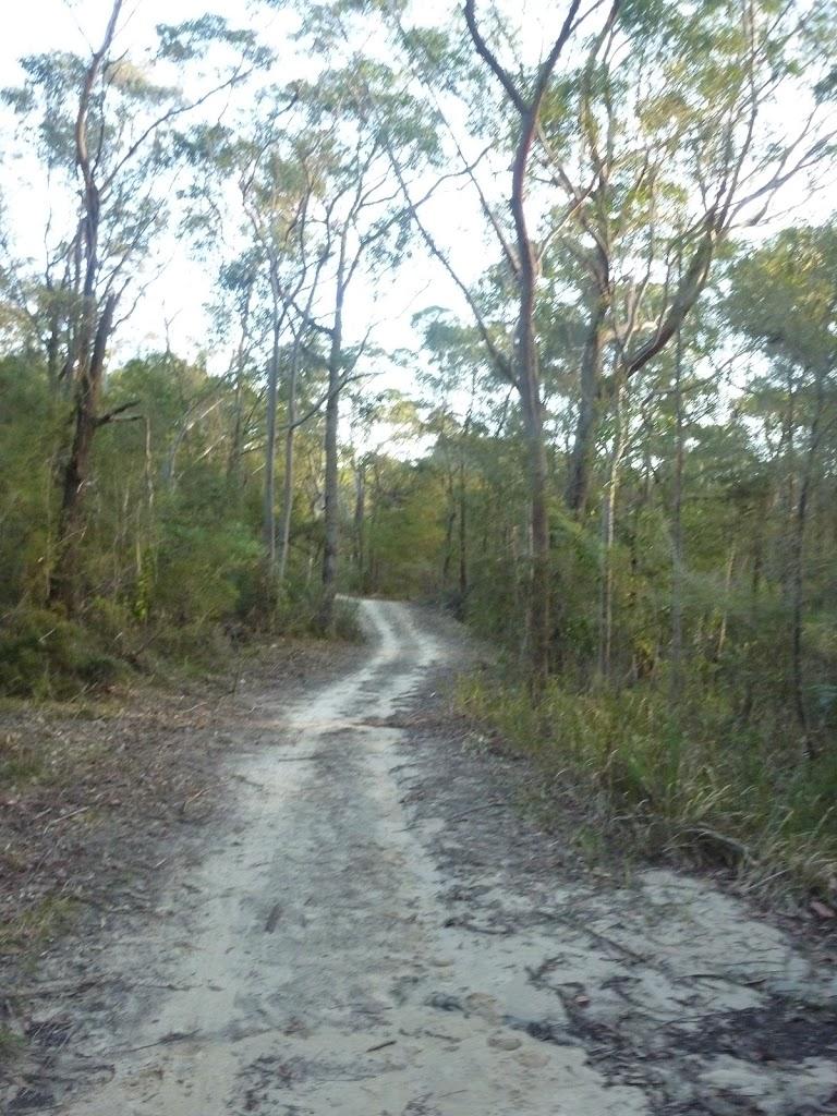 Perimeter Trail near Terrey Hills (307670)