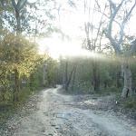Perimeter Trail near Terrey Hills (307715)