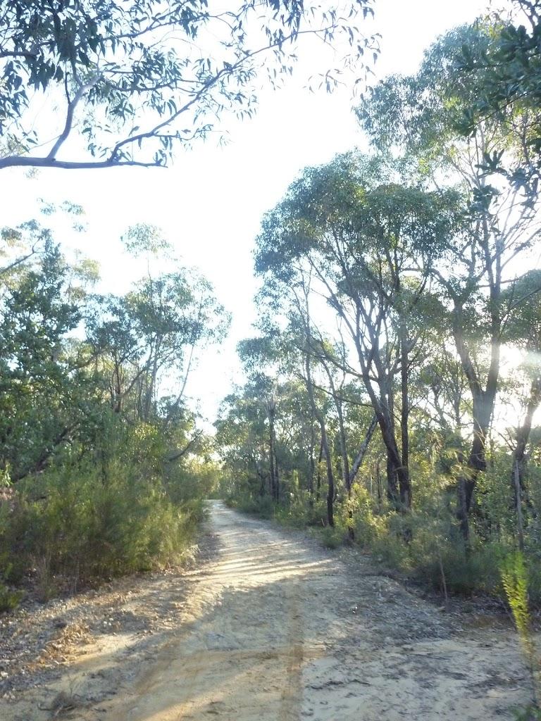 Perimeter Trail near Terrey Hills (307772)