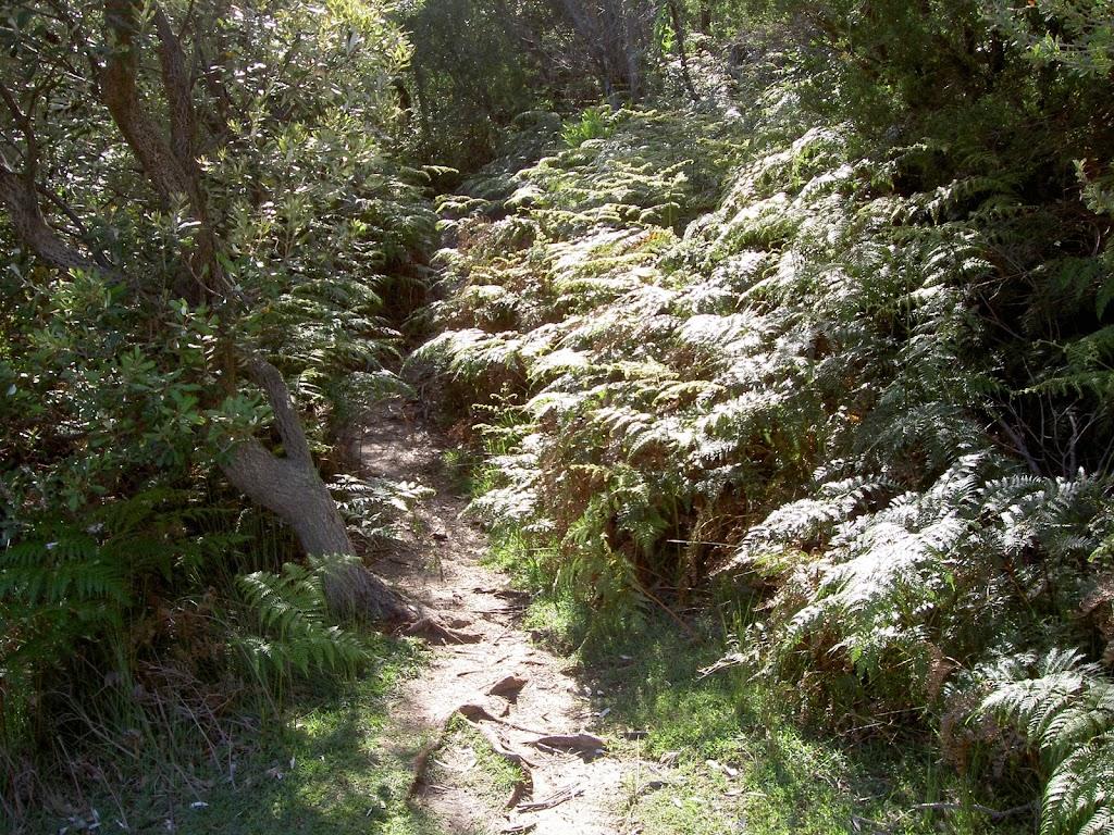 Ferns around track