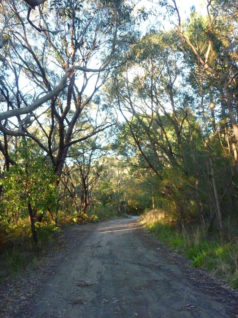 Cullamine Rd near Terrey Hills (307883)