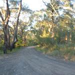 Cullamine Rd and Perimeter Trail near Terrey Hills (307892)
