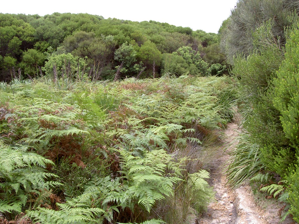 Ferns near Headland (30790)