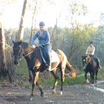 Horse riding on Cullamine Rd near Terrey Hills (307904)
