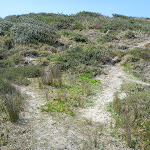 Sandy track out of Cruwee Cove, near Cape Banks