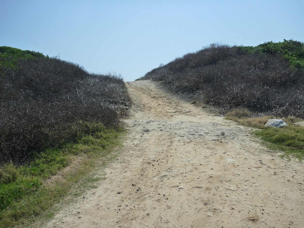 Cape Banks management trail near La Perouse (310277)