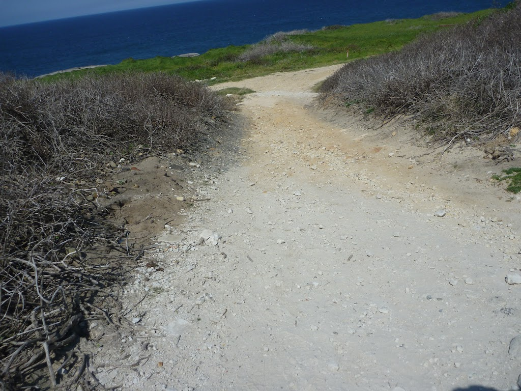 Cape Banks management trail towards Cape Banks (310292)