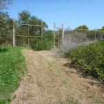 Fence on Coastal Cemetery Trail near Botany Bay National Park (310490)