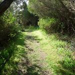 Henry Head Track near Botany Bay National Park (310949)