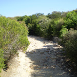 Coast Track (31138)