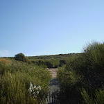Coast Track (31204)