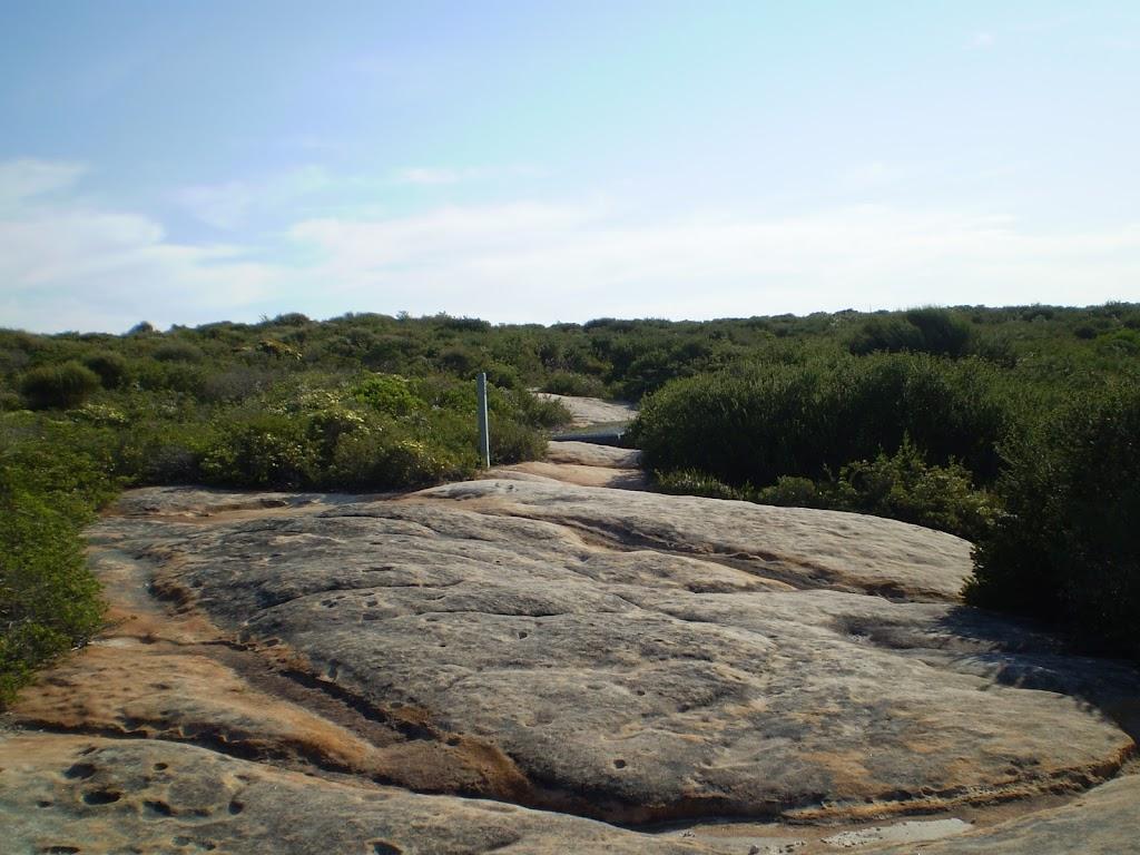 Coastal Track (31303)