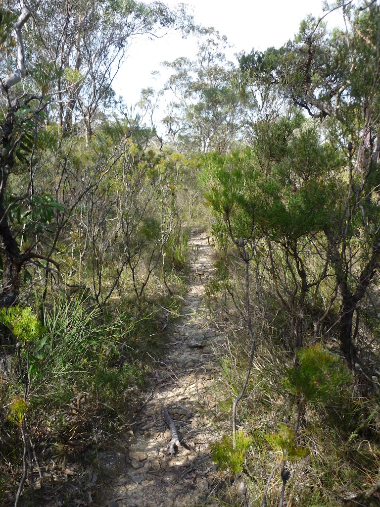 Track east of Chinamans Gully on Mount Solitary