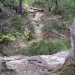 The Engadine Bushtrack (31645)