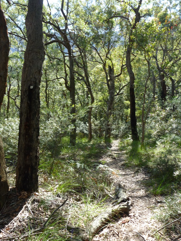 Mt Solitary track east of the Kedumba River