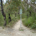 Most of this trail is bushtrack so bike riders are discouraged (31732)