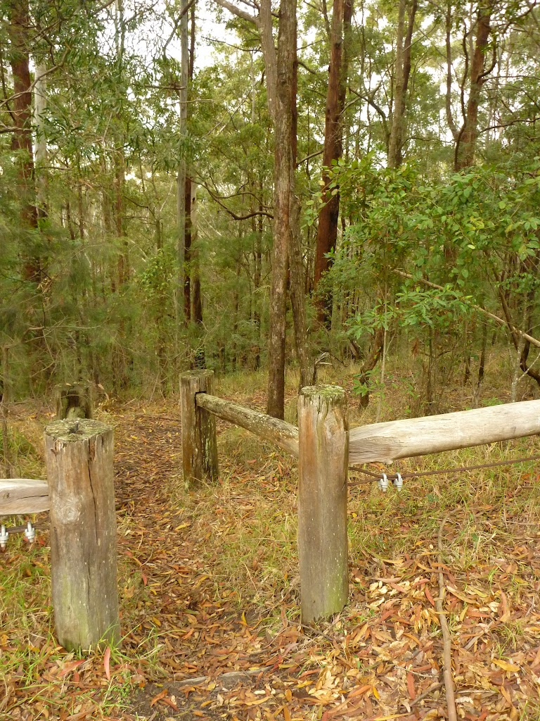 Start to Muirs Walking Track near Cooranbong