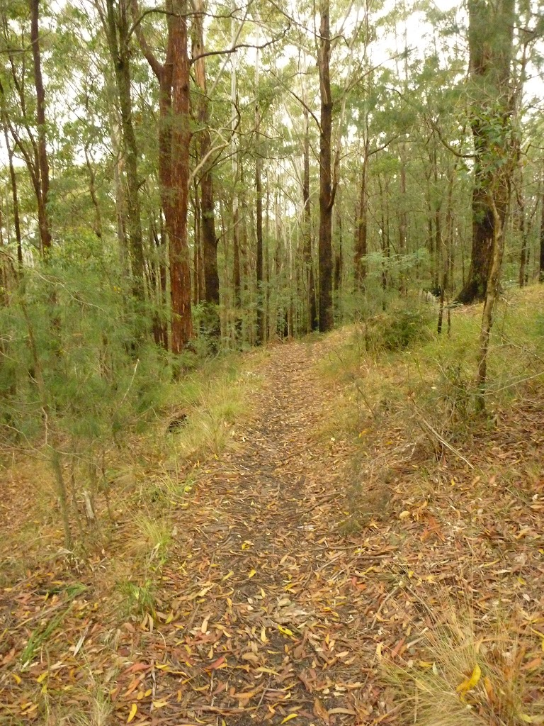 Track near Muirs Lookout