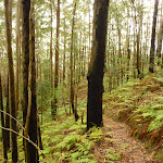 Muirs Lookout track near Cooranbong (320084)