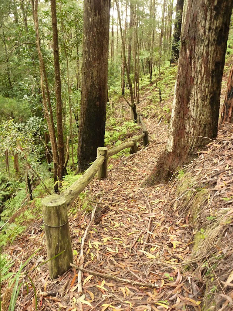 Muirs Lookout track, near Cooranbong