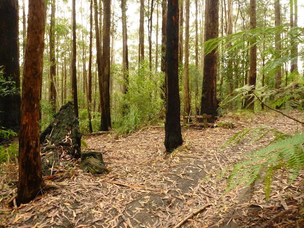 Forest near Cooranbong