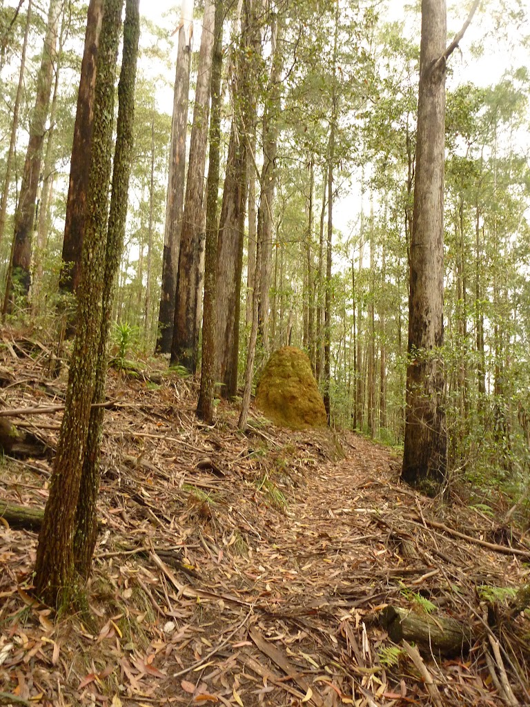 Steep track near Muirs Lookout