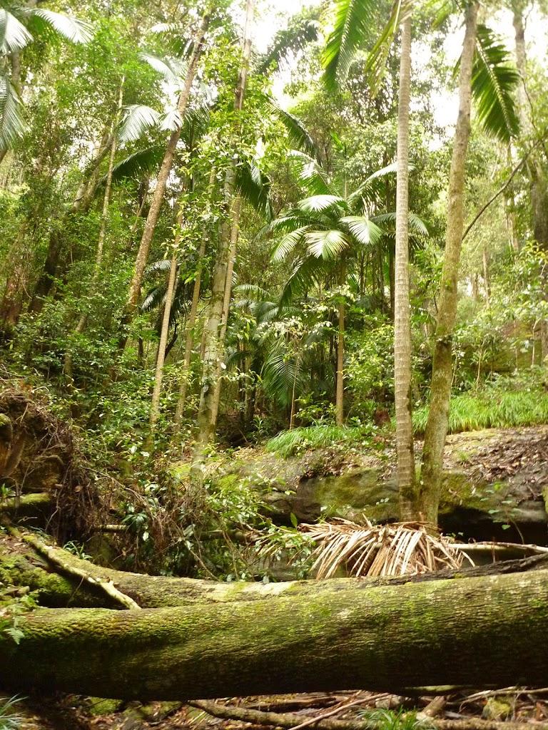 Lush rainforest near Muirs Lookout