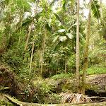 Lush rainforest near Muirs Lookout (320195)