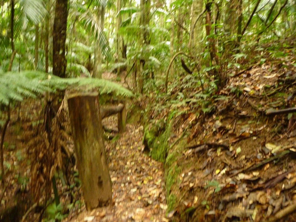 Timber post and track close to Muirs Lookout in the Watagans