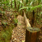 Timber post and railing close to Muirs Lookout near Muirs Lookout (320246)
