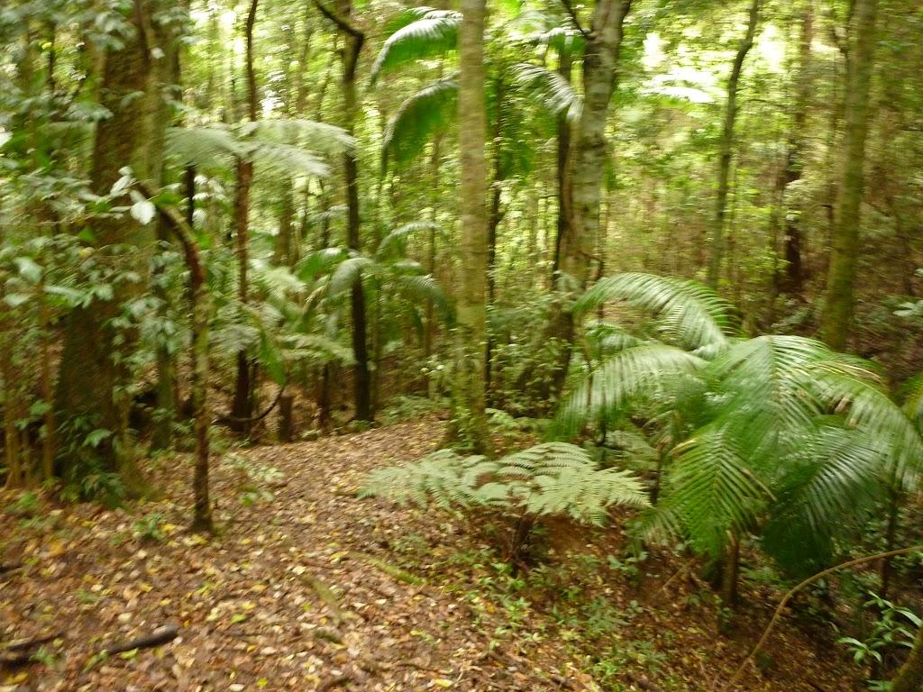 Moist rainforest near Muirs Lookout in the Watagans