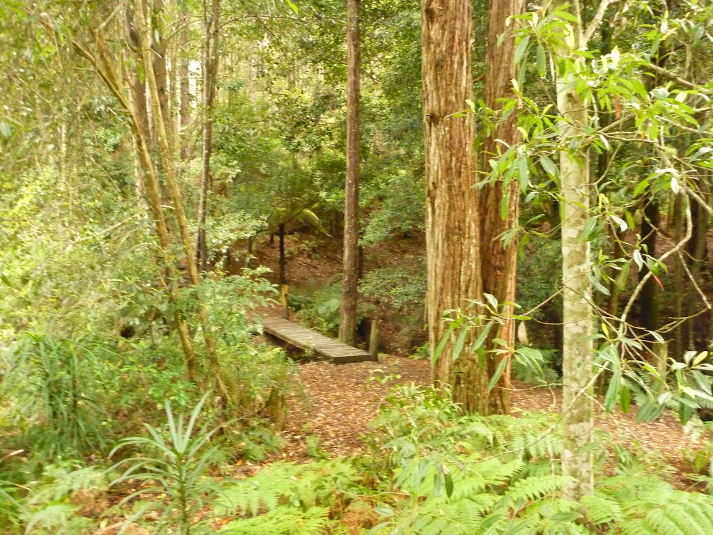 Track and bridge over creek near Pines campsite in the Watagans