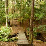 Timber footbridge over creek near Turpentine campsite in the Watagans (320585)