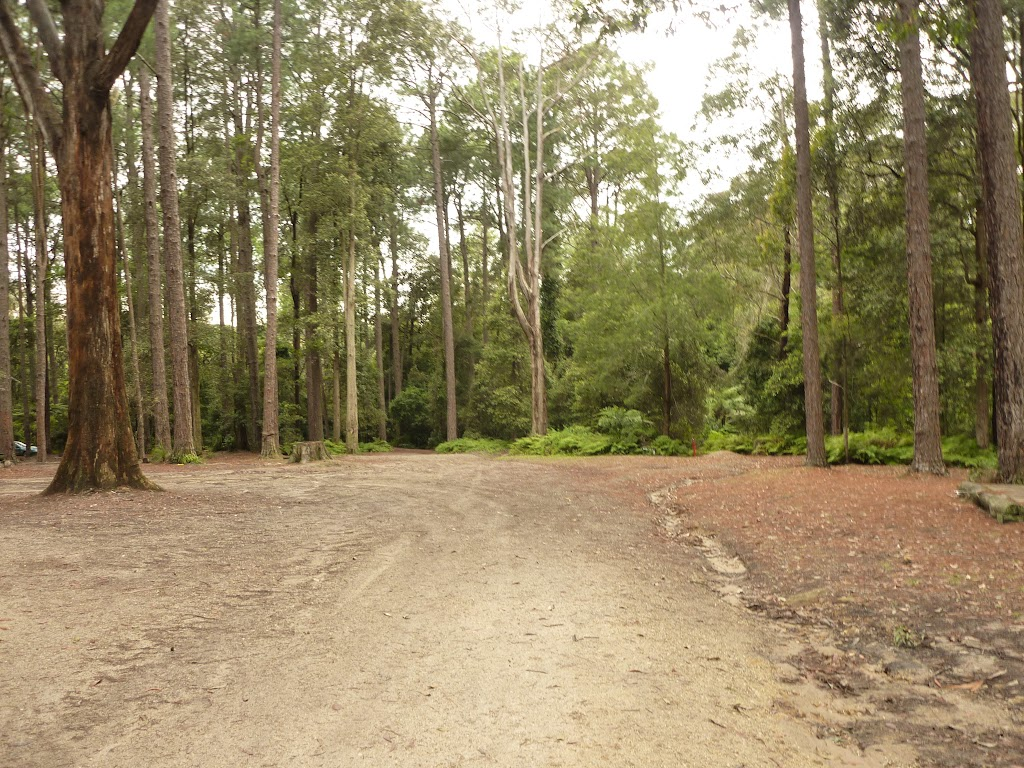 Pines campsite in the Watagans (320624)