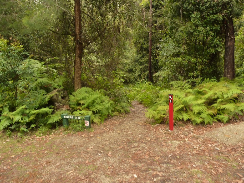 Start to track in the Pines campsite in the Watagans