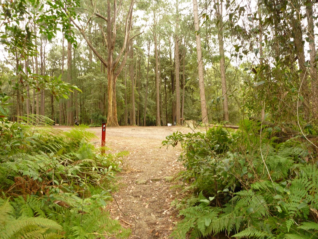 Track near pines camping area in the Watagans