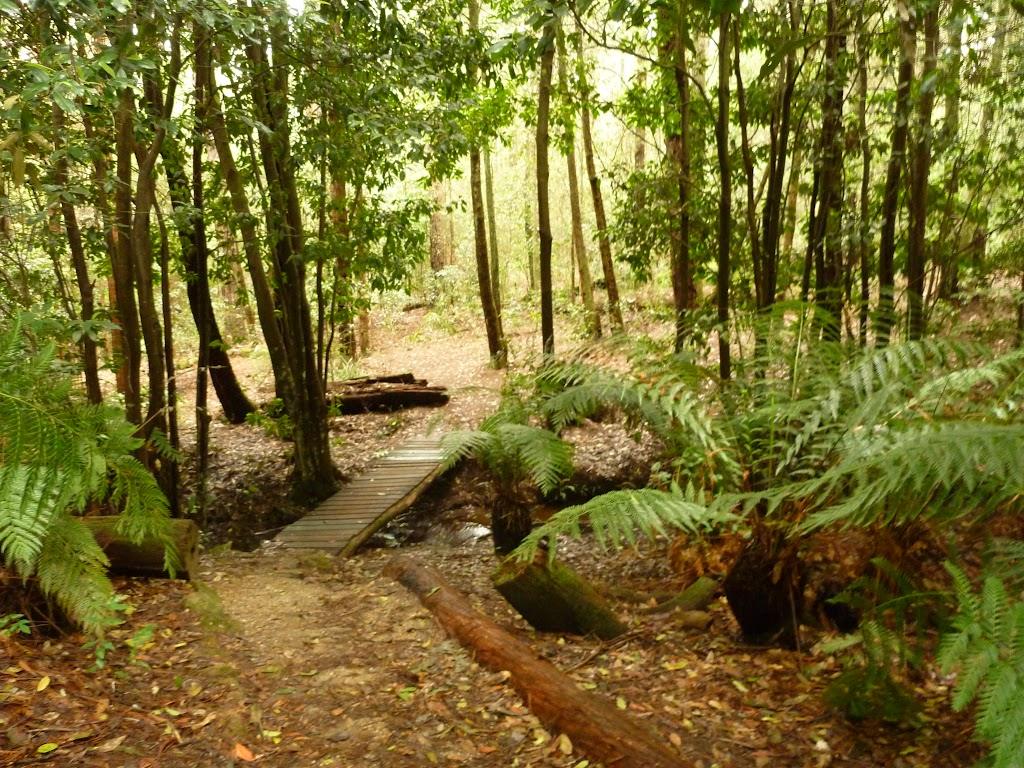 Timber bridge in the Watagans (320642)