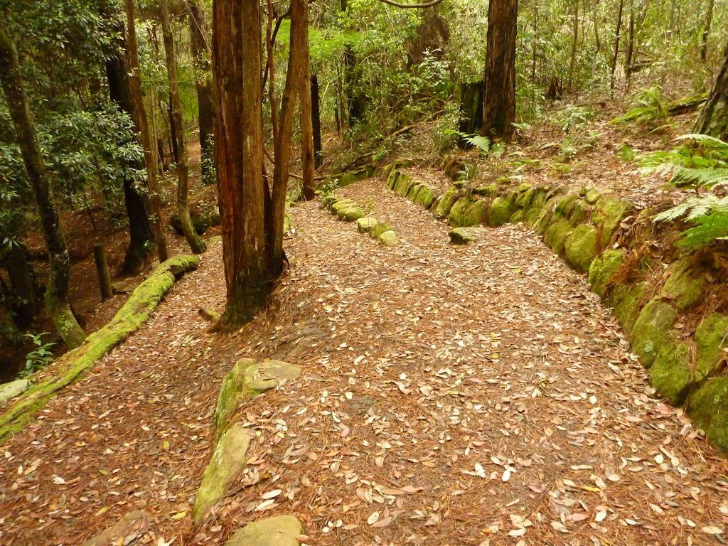 Track with steps down to the small waterfall near the Pines campsite in the Watagans
