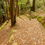 Track with steps down to the small waterfall near the Pines campsite in the Watagans (320657)