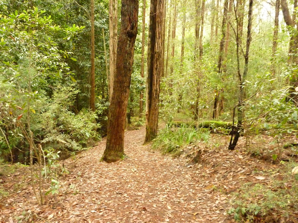 Track to the Pines picnic area in the Watagans