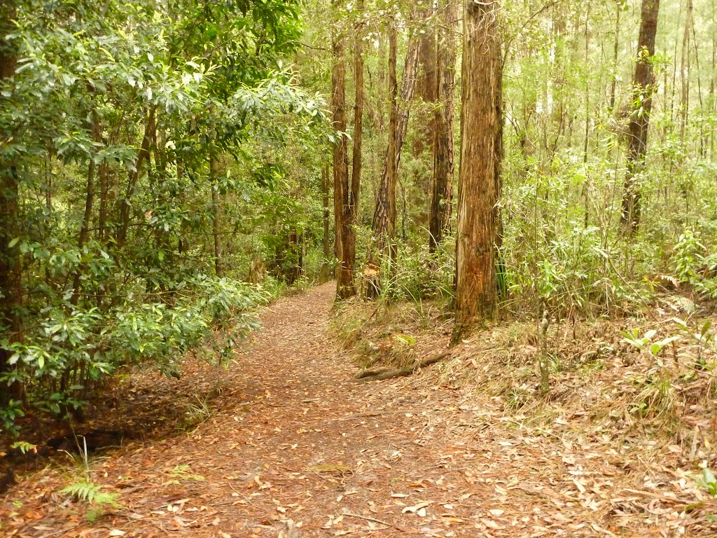 Track near the Pines campstie in the Watagans