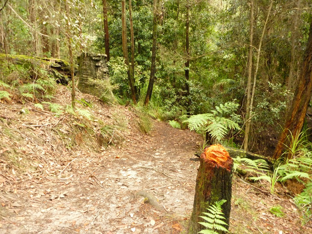 Track through forest in the Watagans