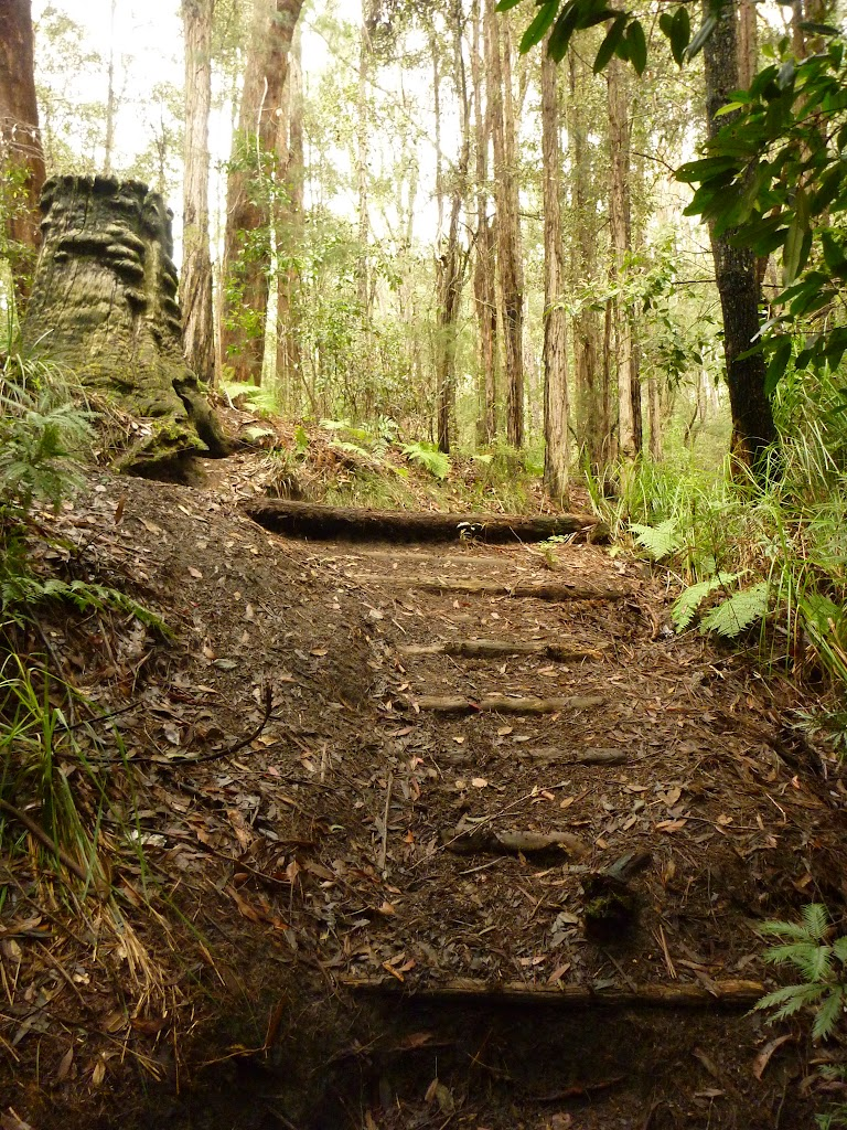 Timber steps on track near the Pines campsite in the Watagans
