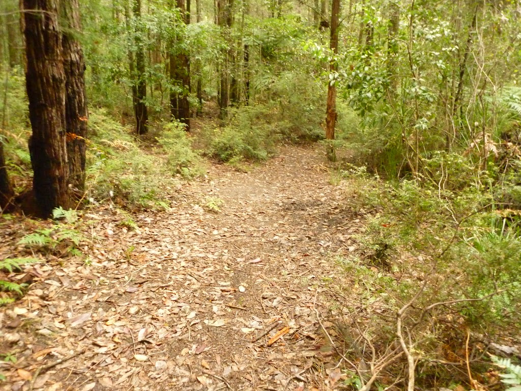 Track downhill near the Pines picnic area in the Watagans