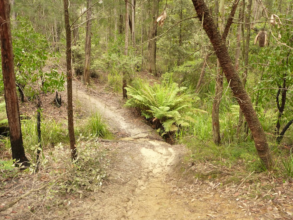 Track and creek on the way to Abbotts Falls in the Watagans