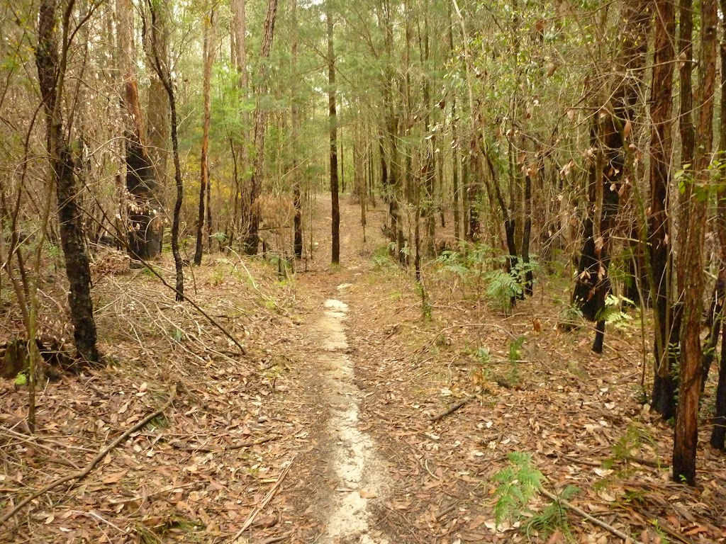 Narrow track towards the Abbotts Falls in the Watagans