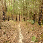 Narrow track towards the Abbotts Falls in the Watagans (320990)