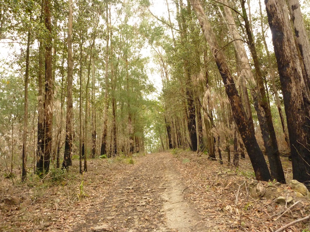 Management trail in the Watagans (321095)